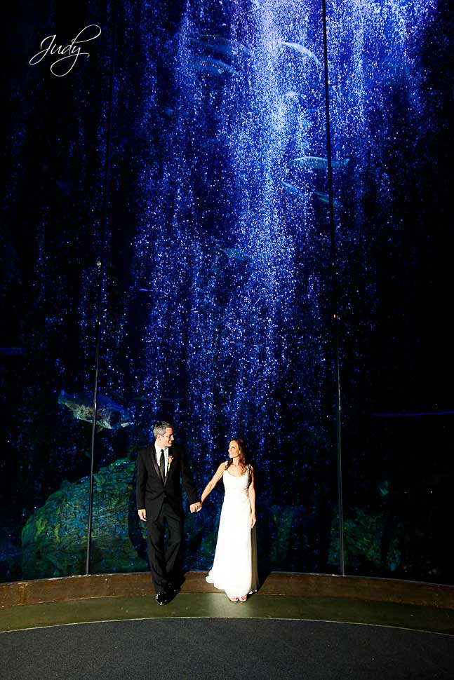 Aquarium of the Pacific Wedding Photography | Jessica & Evan