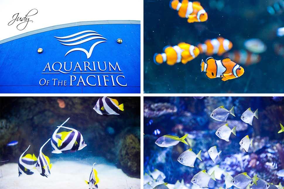 Aquarium of the Pacific Wedding Ceremony Details