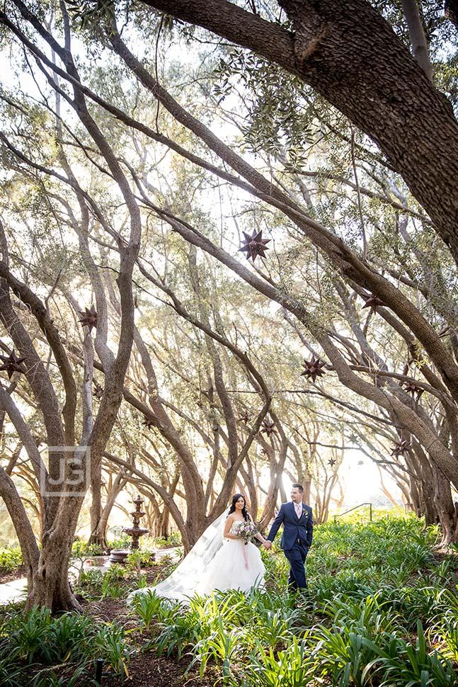 Padua Hills Olive Orchard