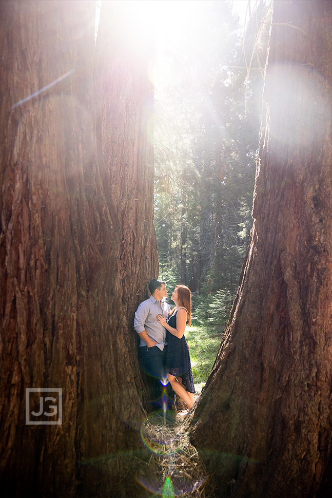 Engagement Photography in Sequoia