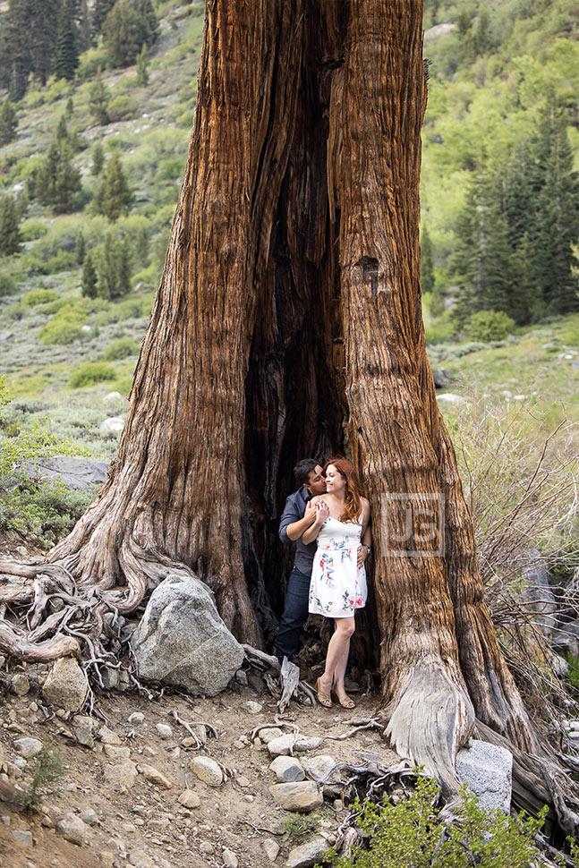 Sequoia Engagement Photos