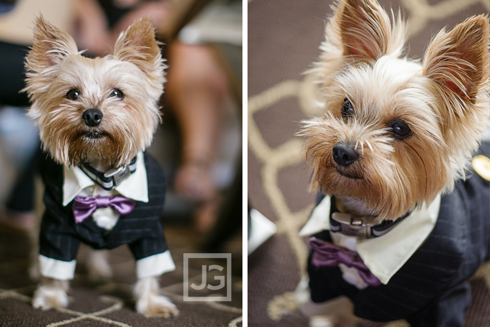 Wedding Ceremony Dog Ringbearer