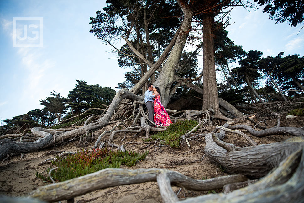 Exposed tree roots engagement photography san francisco