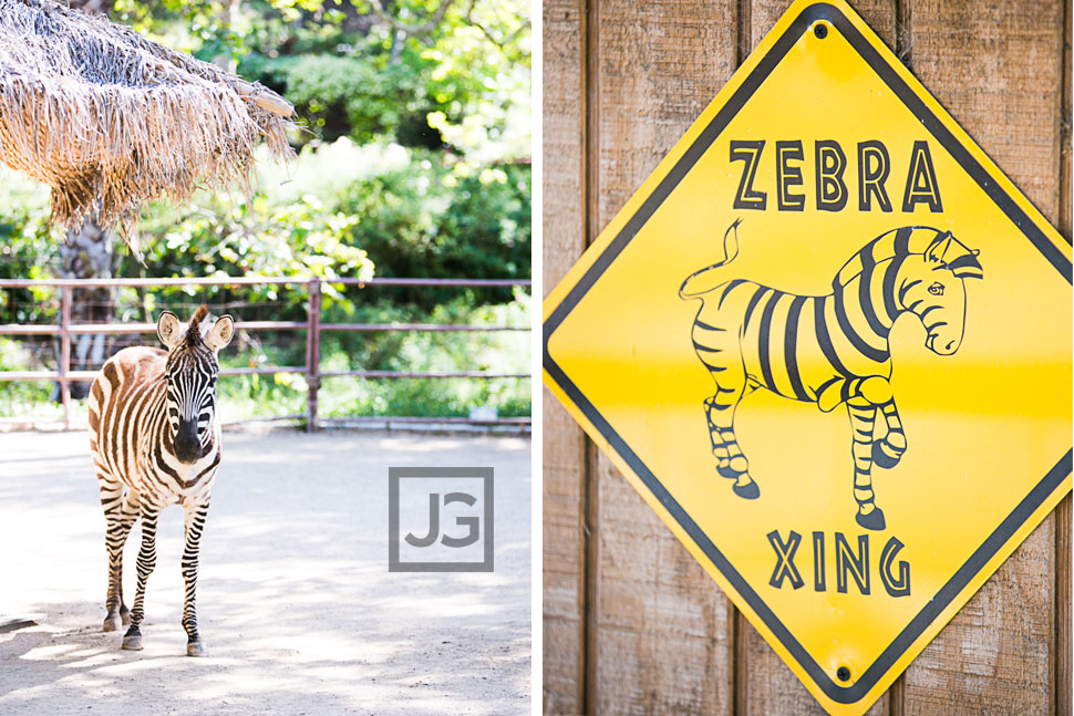 Rancho Las Lomas Zebra